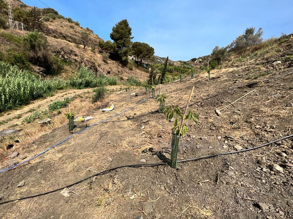Fabulous rustic, dryland finca in Torrox, with well own and olive trees, is 15 kilometres from the c,Spain