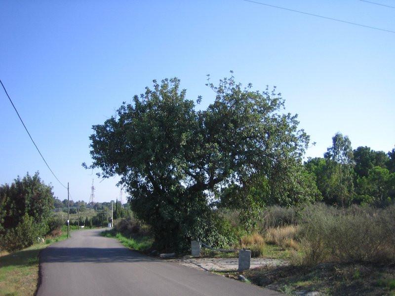 Terrain Terrain à Estepona, Costa del Sol