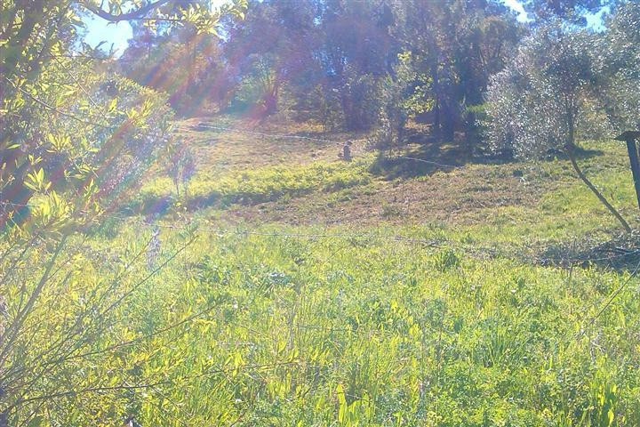 Plot, Land  for sale    en Jubrique
