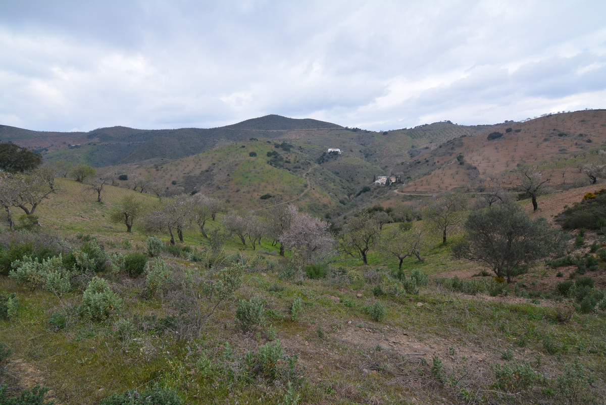 Plot, Land  for sale    en Almogía