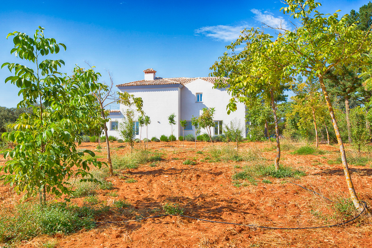 An outstanding opportunity to own an impressive finca of 30,000m2 of flat land with 1,000 walnut tre, Spain