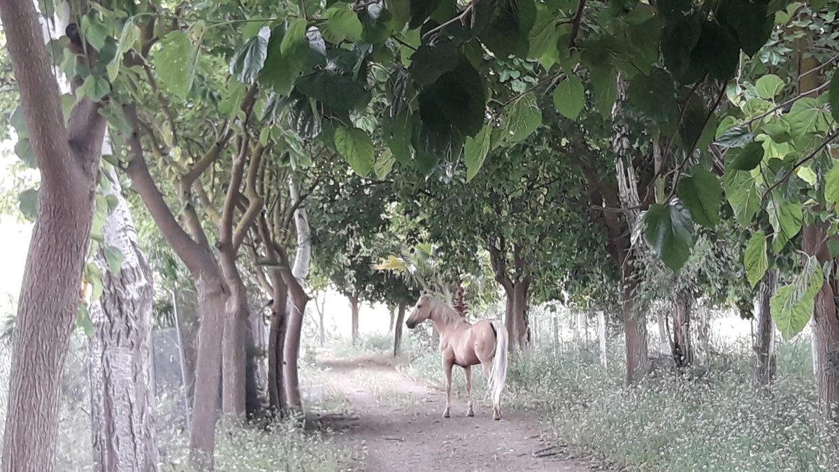 Impressive Finca DEDICATED TO THE BREEDING OF HORSES a short distance from Marbella. It has a BOOK O,Spain