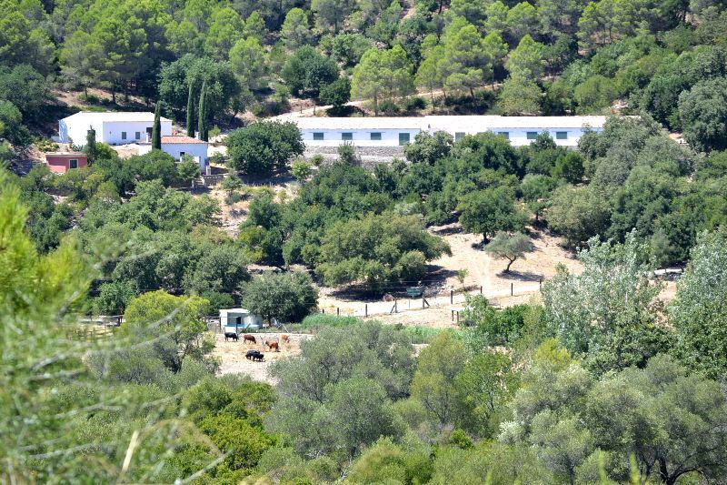 Lovely Finca in Gaucin, perfect if your client is thinking of moving to the countryside and wanting , Spain