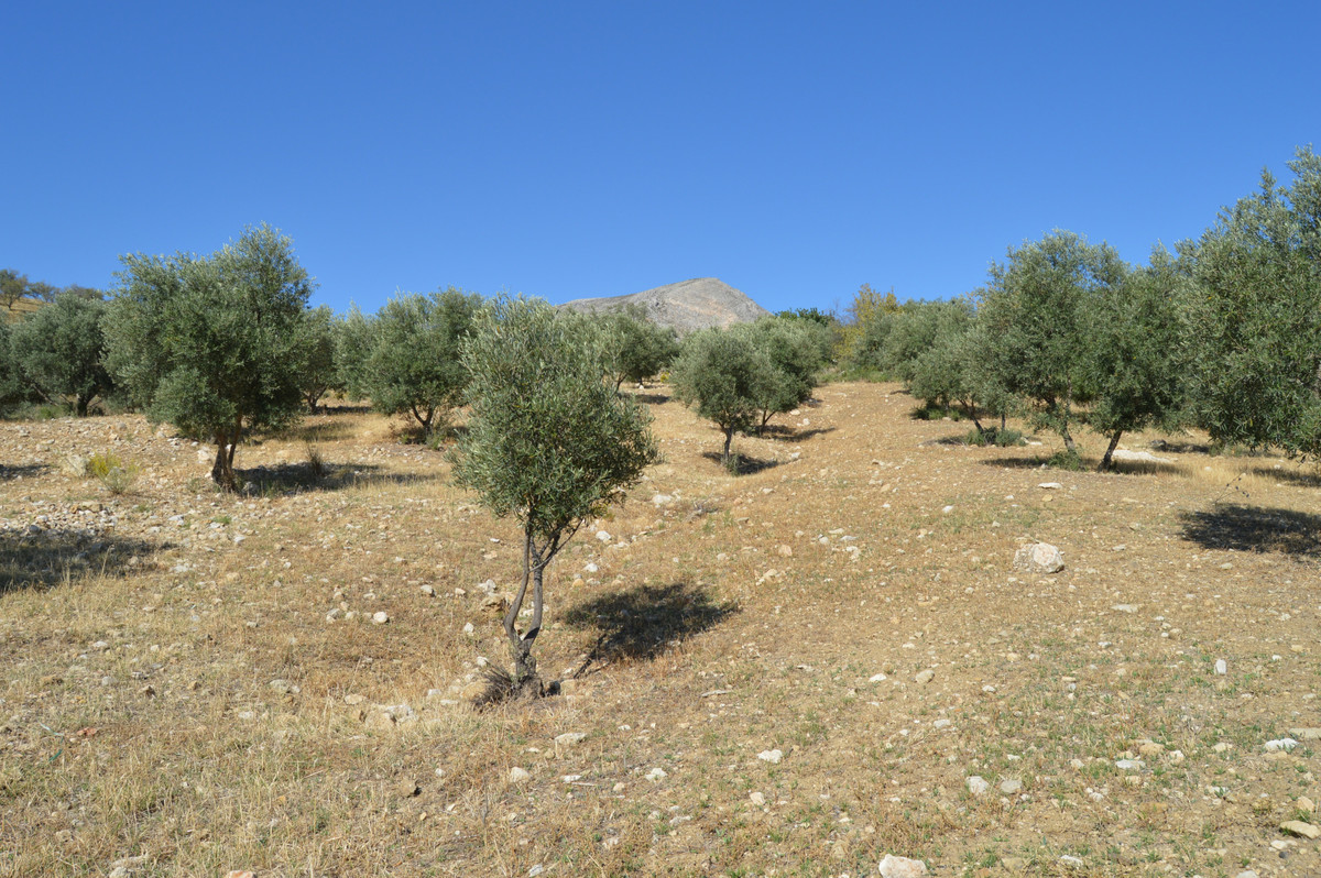 Plot  Land 													for sale  																			 in Alora