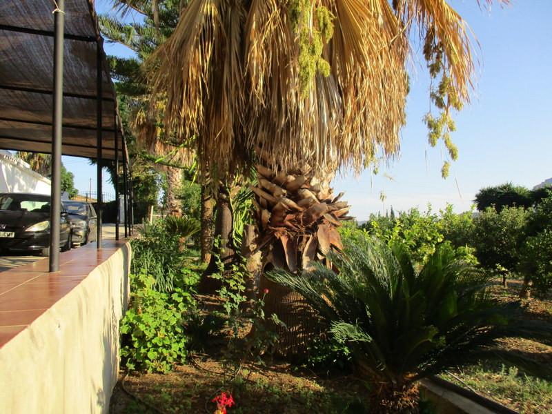 House in Alora R3291688 28