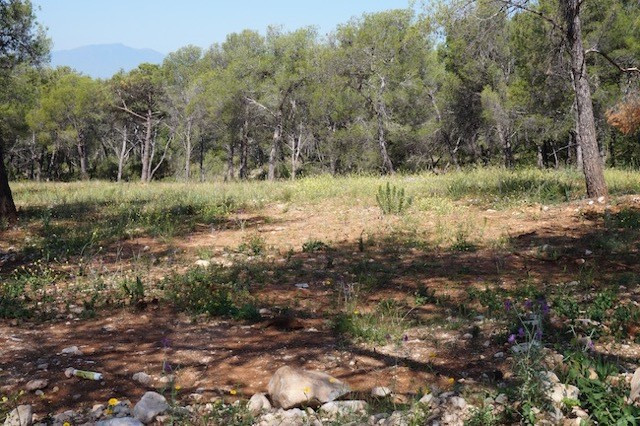 Residential Plot in Sierra Blanca