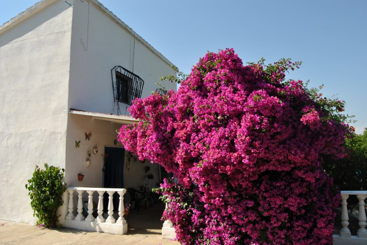 2 bed villa for sale coin