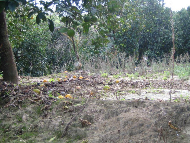 Land in Restabal for sale