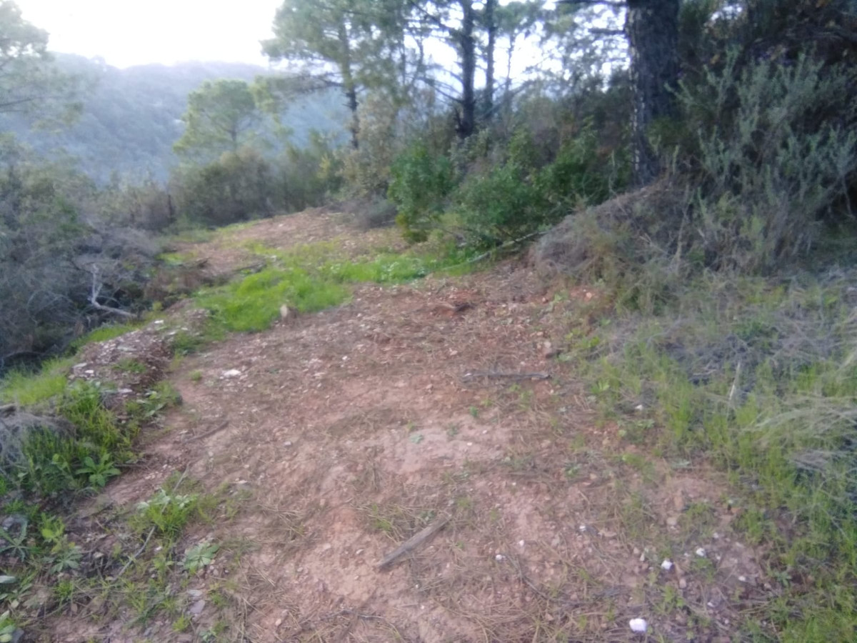 Plot, Land  for sale    en El Padron
