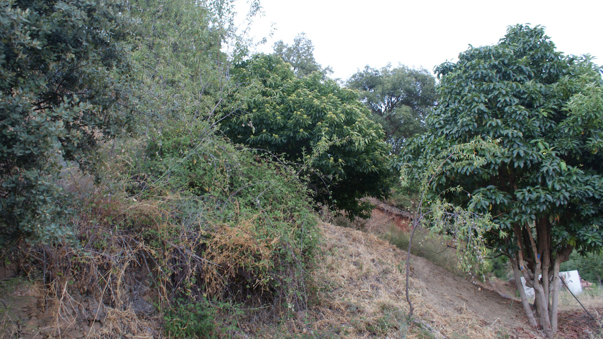 R3291721: Plot for sale in Jubrique