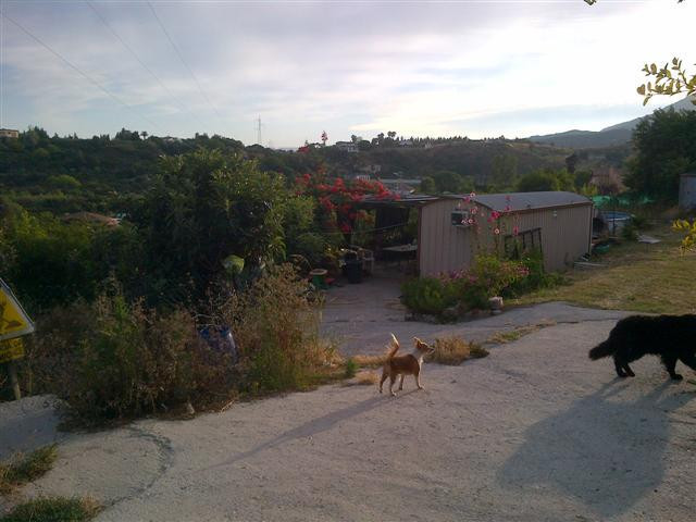 Rustic plot of 6000 m2 with house of tools of 20 m2 and pool. Plot of land with the production of me, Spain