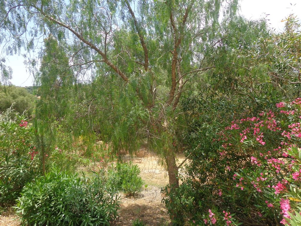 Sotogrande Alto : Building plot for one villa with golf and sea views, located with peaceful area an,Spain