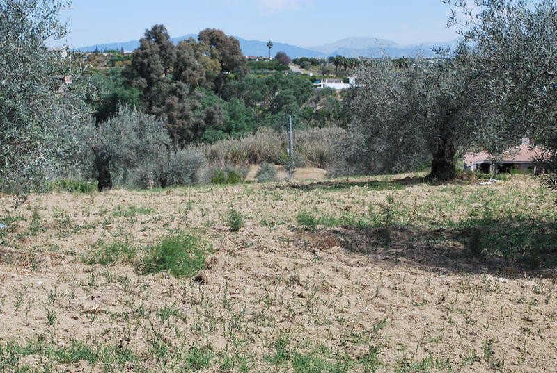 Rural property of 7.000 m2 in Alhaurin el Grande, close to the road, very good access, electricity a, Spain