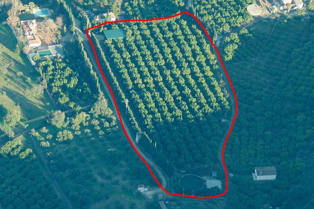 Very large avocado grove with over 20,500m² of land. The property has 2 big warehouses, one is 176m², Spain
