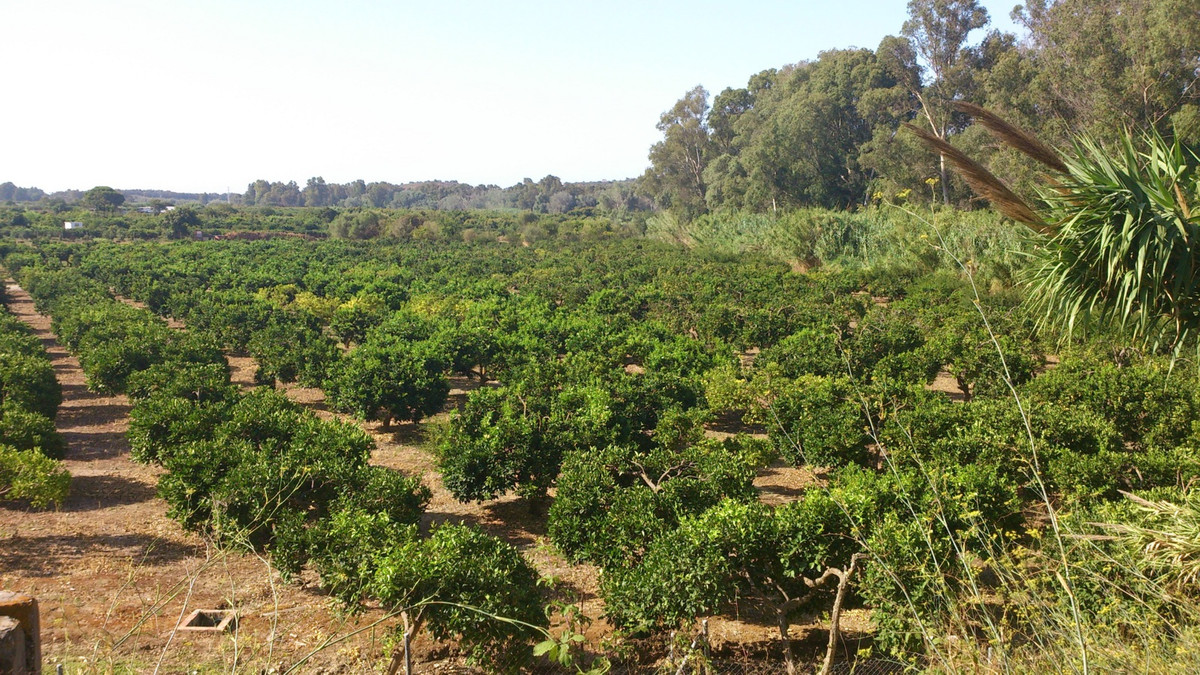 Magnificent rustic land of 20,000 m² (2 hectares), roadside. The farm is strategically located in lo,Spain