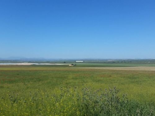 Extensive Finca for sale of 200.000 m2, just 5 km from Fuente de Piedra, a farm with great exploitat, Spain