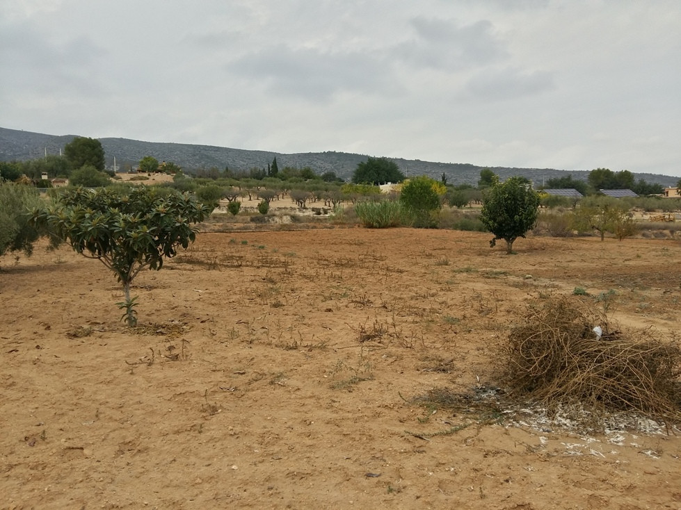 Plot of 4.968m2 with a little casita of 80m2 for sale  in Ontinyent. The house is in need of complet,Spain