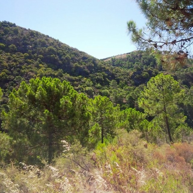 East facing villa plot within tranquil Monte Mayor Urbanisation with 24/7 security. Spectacular pano, Spain