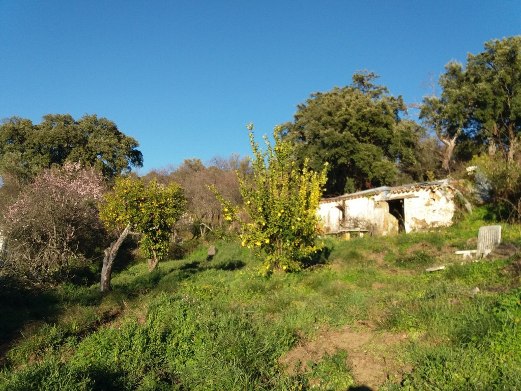 6800 m2 of land extends along the Arroyo Hondo, a place of singular beauty in the municipality of Ju,Spain
