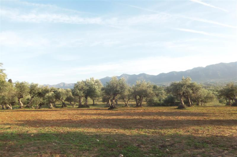 Beautiful piece of land about a 5 minute drive from the centre of Alhaurin el Grande. On the land yo, Spain