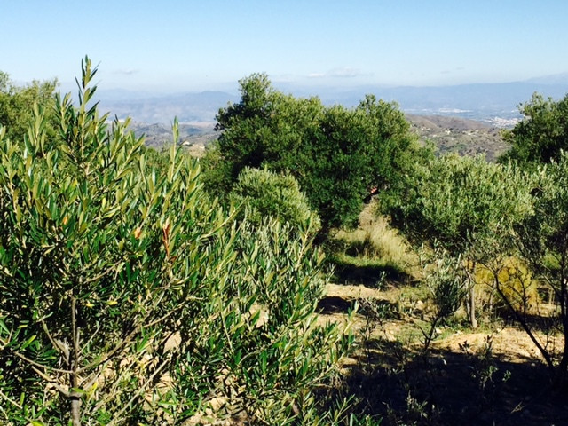 Plot in Monda Excellent for those who want to have their own garden and  maybe organic farming. Only,Spain