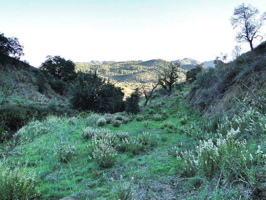 The private location with good views, the plot has good access with various platforms on the olive g,Spain