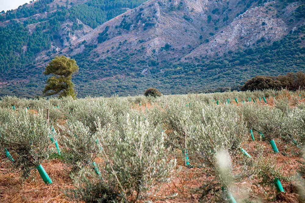 Finca for sale of 100 ha next to the Alcaiceria, in Alhama de Granada, known as the Huerta Grande. C, Spain