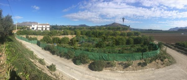 RUSTIC FINCA WITH 13.700 SQM PLOT WITH FRUIT TREES AND AVOCADO PLANTATION  This finca in the municip,Spain