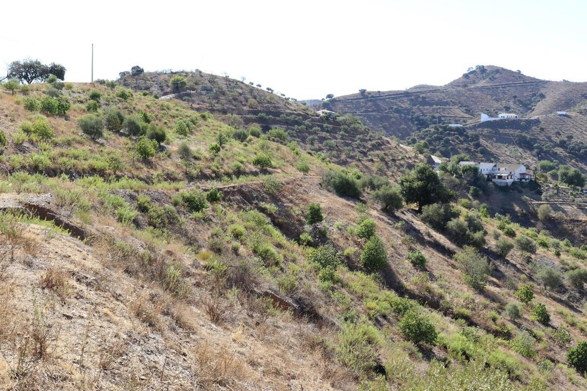 Large plot of land dotted with around 700 Avocado trees in the Alora countryside.  On the land there,Spain