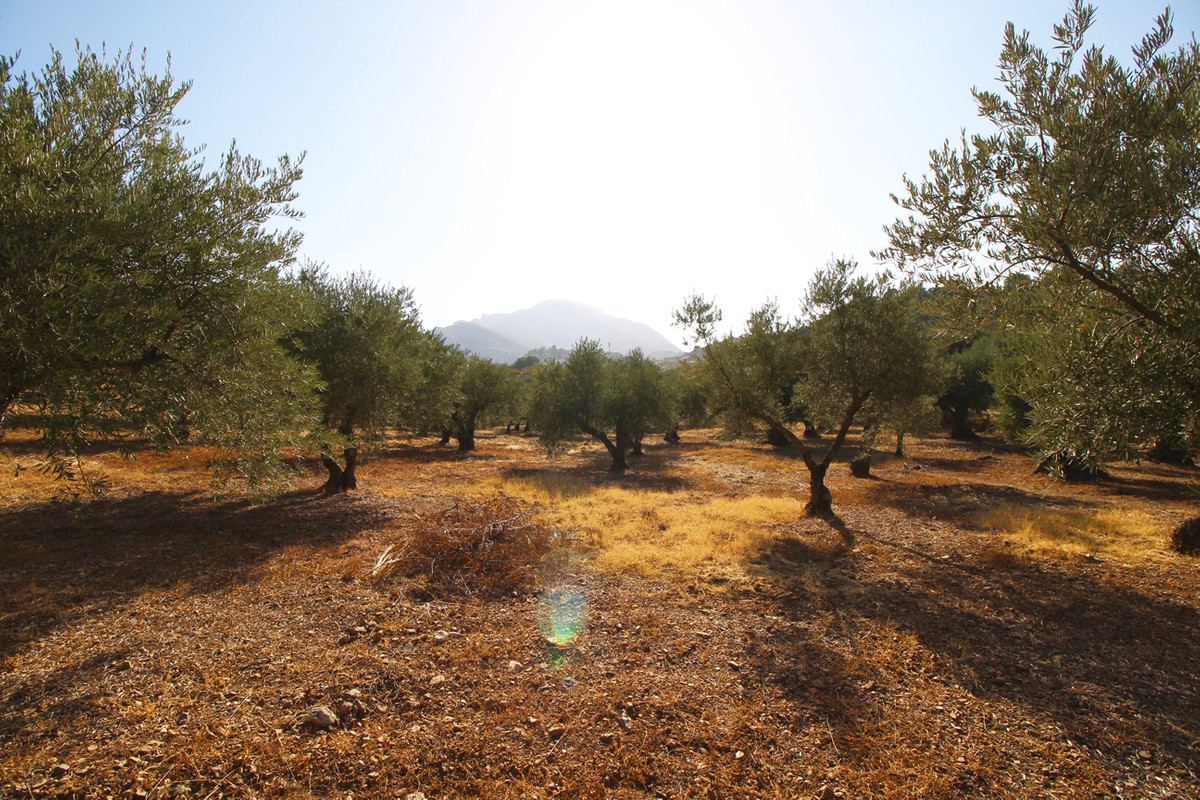 Land 13.000 m2 oliv grove in Monda. Easy access from the main road.,Spain