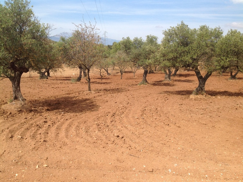Finca with 6,000 m2 in Alhaurin el Grande, dry land and olive groves, possibility of connection of e, Spain