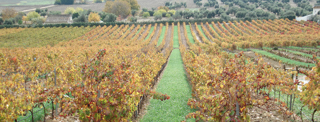 Award winning organic Vineyard/Winery/B&B for sale in Ronda.  This fantastic winery is the mater, Spain