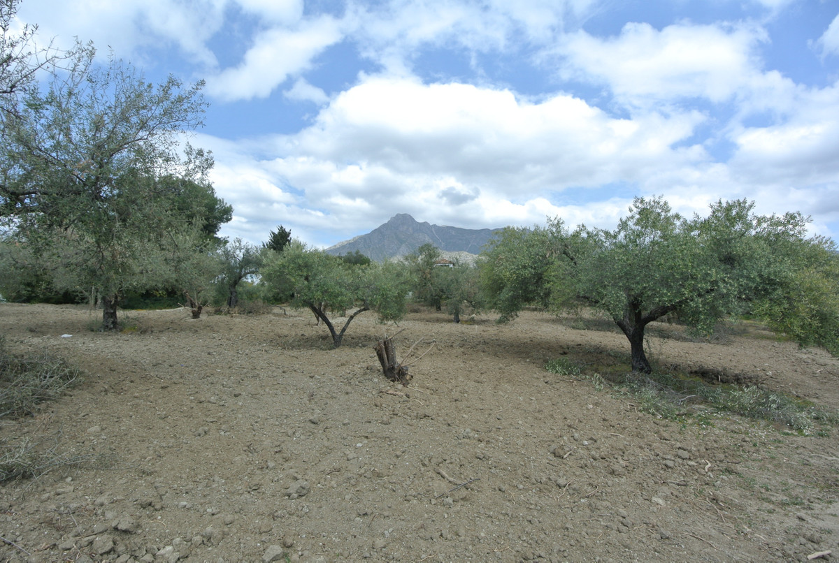 This huge flat plot has 2.250 m2 and is located in one of the best areas, The Golden Mile, next to M,Spain