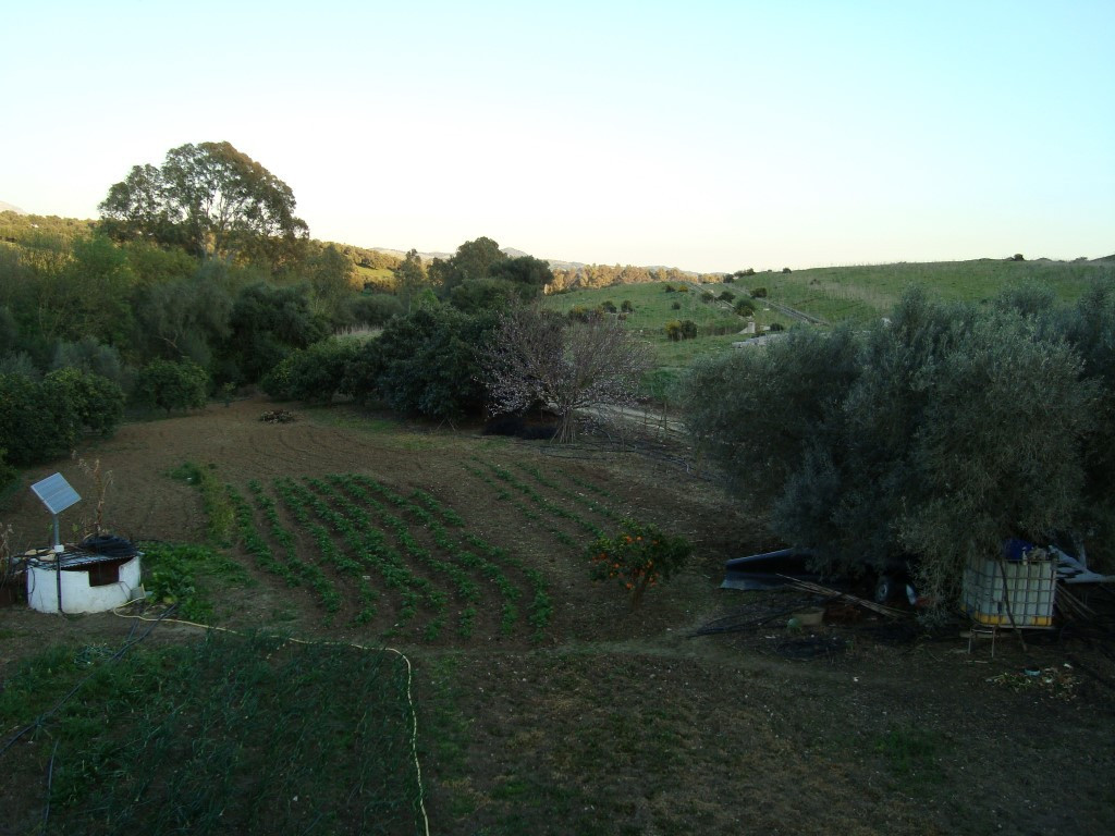 Beautiful plot in the countryside with its own well, with vegetable garden, fruit trees and a brook. Spain