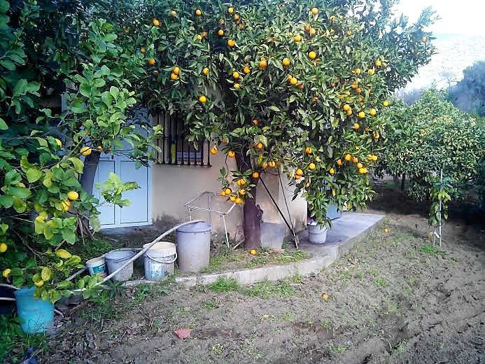 Plot in Ojen , with good access to the road. 7 min Marbella    Finca with fruit trees and cistern an,Spain