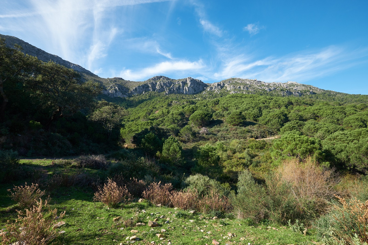 Plot/Land for sale in Casares