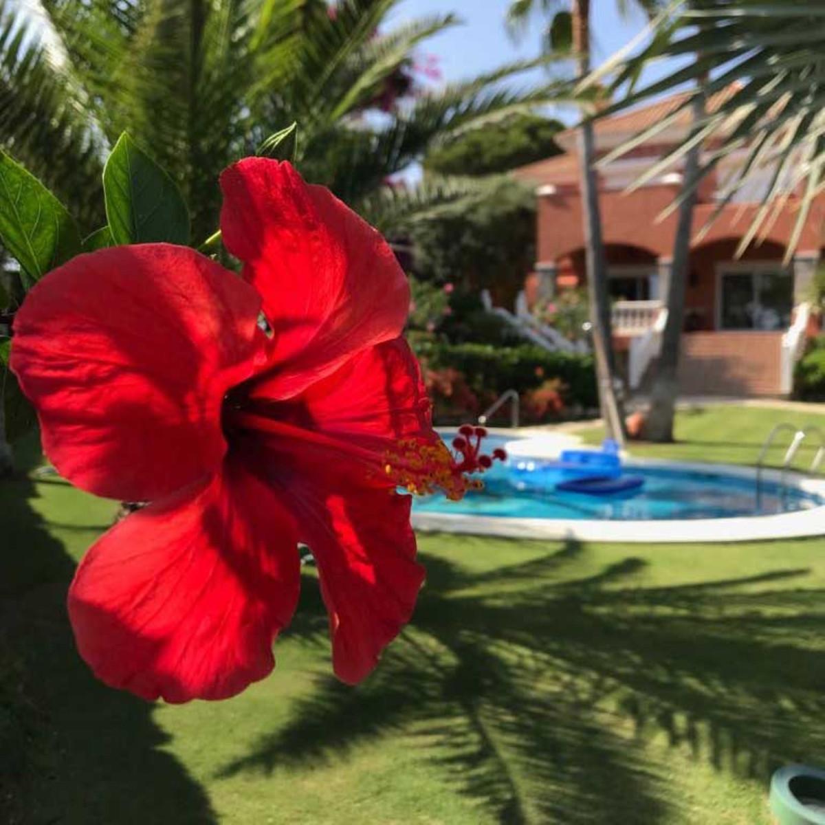 House in Calahonda R3501412 68