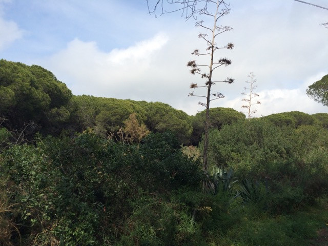Plot in Elviria located on the beach side of the road.,Spain