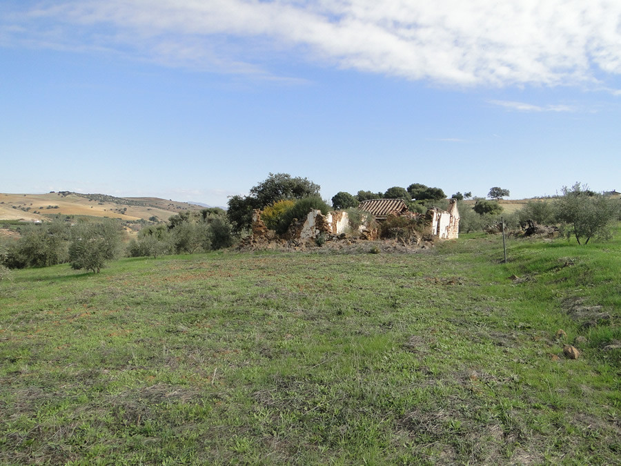 Olive grove with ruin located in a rural location with beautiful views.  Situated 10 minutes from th, Spain