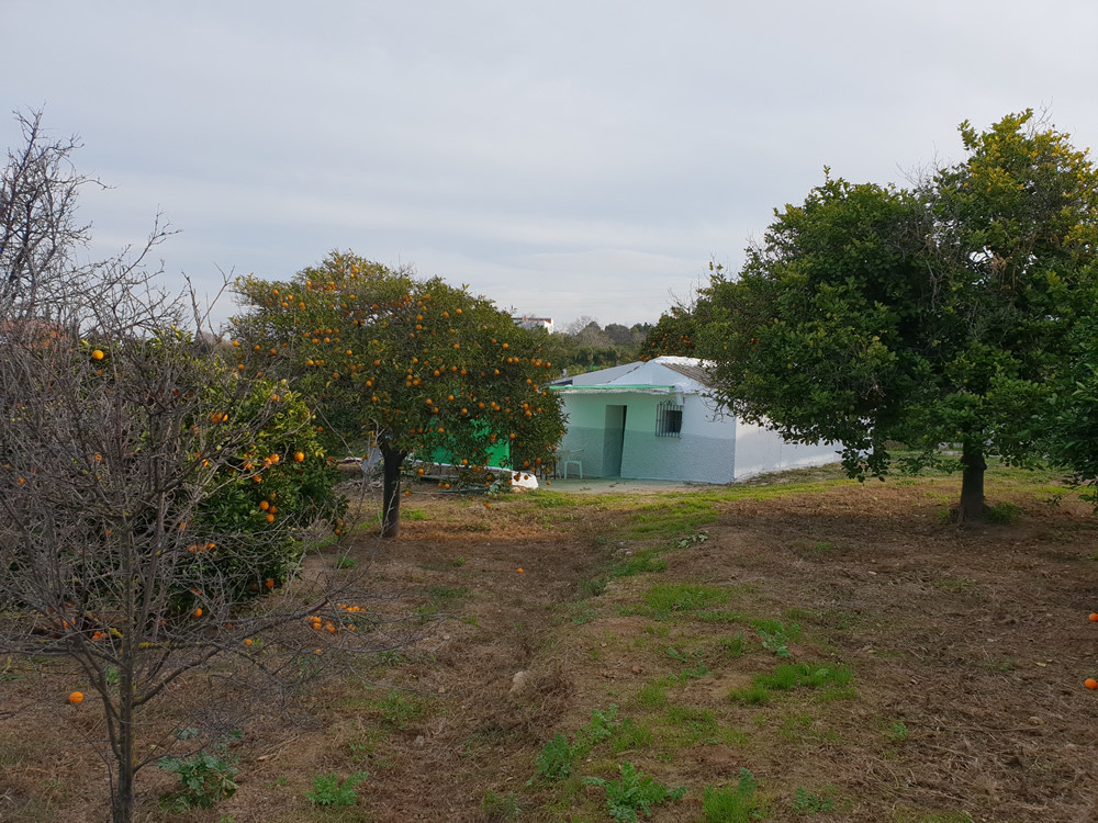 Large flat plot with beautiful views, walking distance to the town.  The land has a varierty of frui, Spain