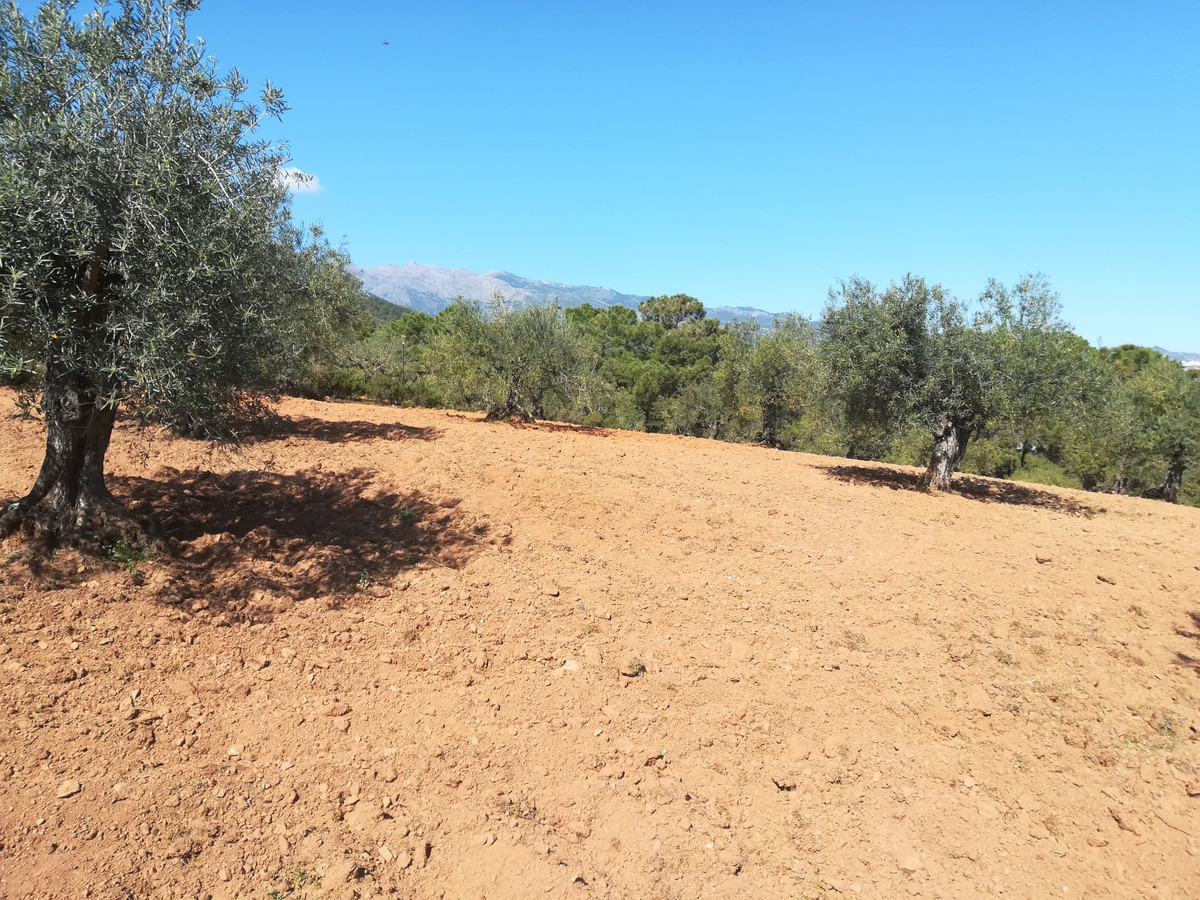 Rustic plot for sale, planted with 60 olive trees, sold together with a house in the town (with disc,Spain