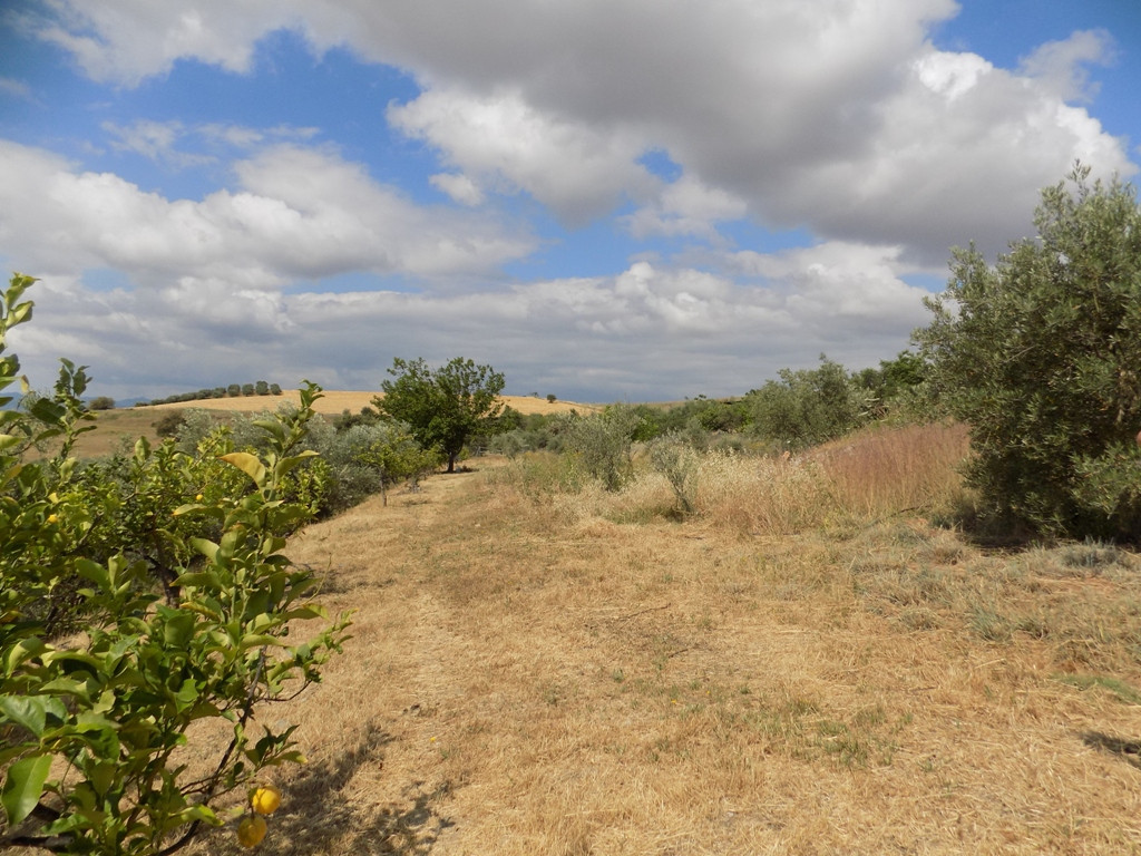 Plot of land of 9000 m2, pending approved segregation, in the municipality of Cartama, laid out on a, Spain