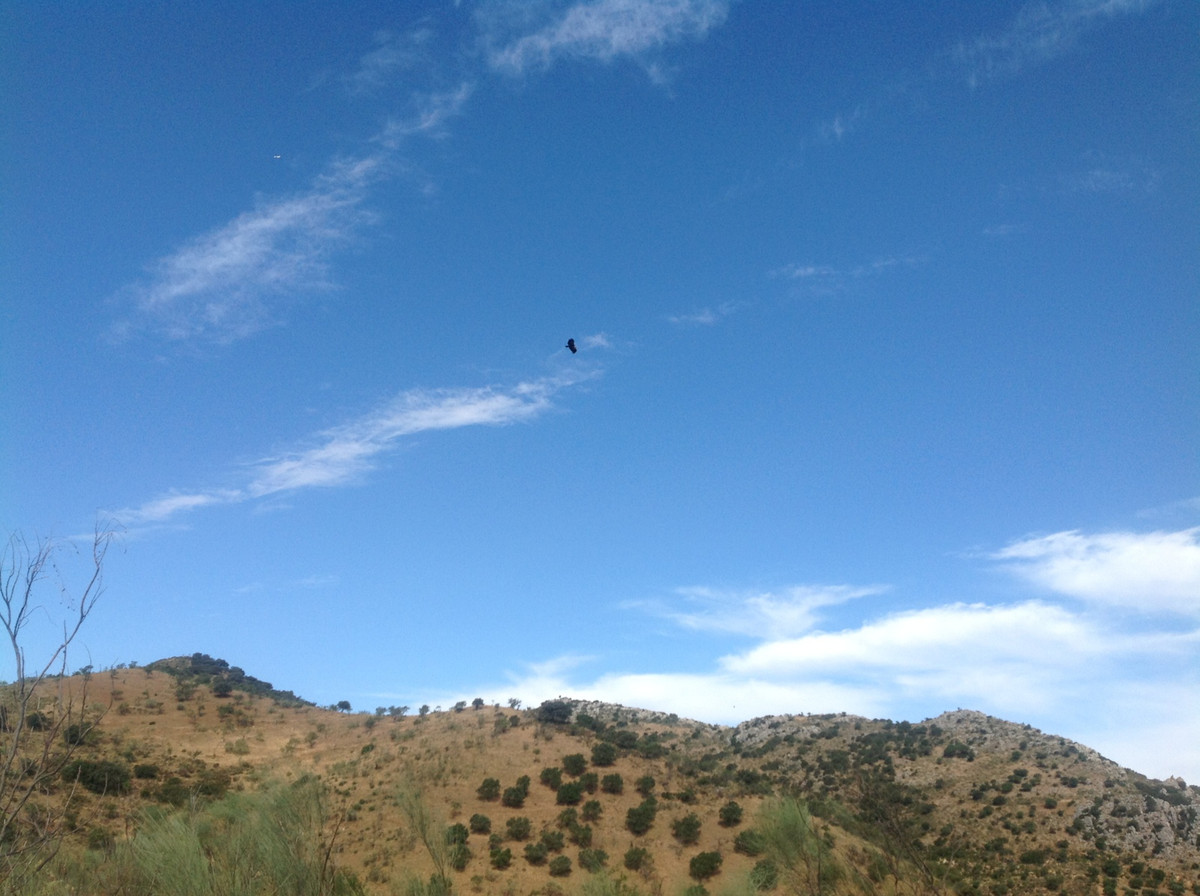 Spectacular finca in the area of Ardales with 110 hectares and about 300 m2 built. 16.5 ha of olive ,Spain