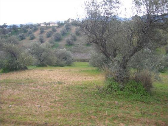 8.000m2 finca near by the road for sale with own well and elecricity, 20 min distance to the airport, Spain