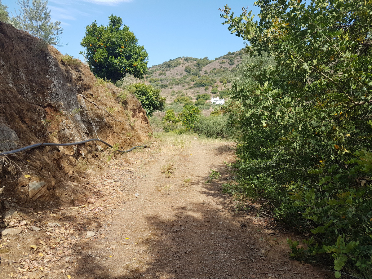 Land for sale in Guaro