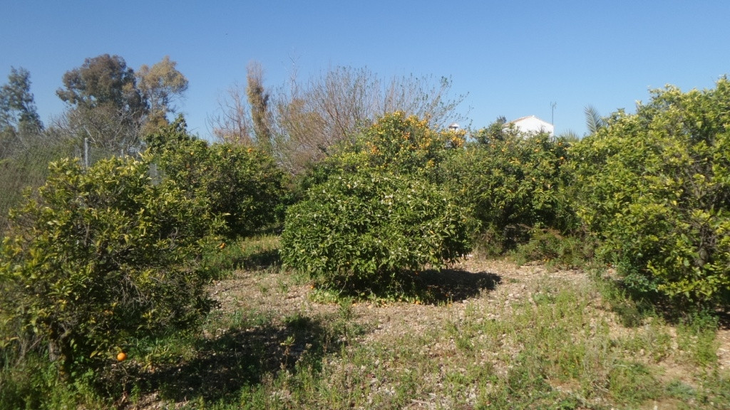 Plot in Alhaurin de la Torre located in a privileged environment. with good  access to all the facil, Spain