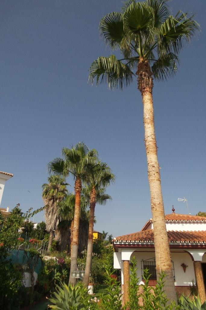 House in Alhaurín de la Torre R2902988 16