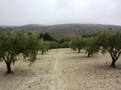 Olive plot for sale of 7082m2. Tarmac access and small store room and lovely views. Quiet location.  Spain