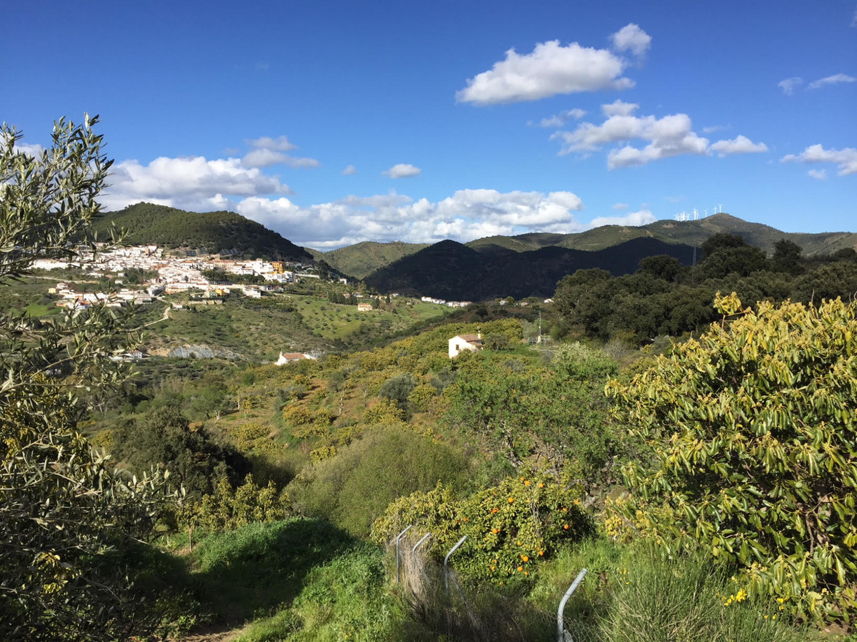 UNIQUE OPPORTUNITY to buy an excellent finca / farmhouse with an avocado plantation in production. a,Spain