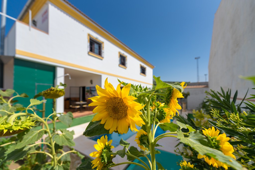 FANTASTIC UNIFAMILIAR HOUSE located in the street Maestra Dolores Perez, - (ZONA EL TORCAL) marked w,Spain